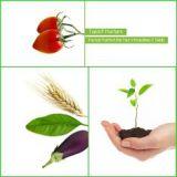 Agricultura performantă este posibilă şi fără modificarea genetică